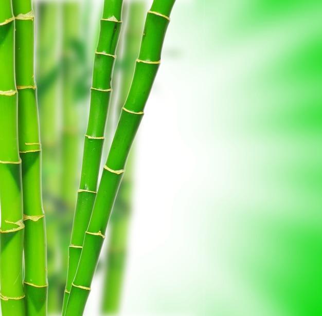 Zielone tło dla projektu