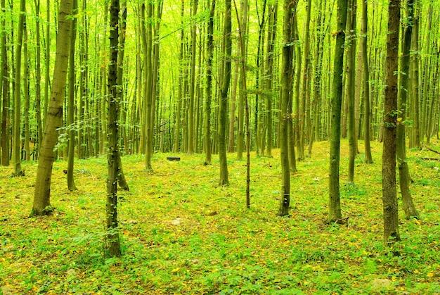 Zielone tło lasu w słoneczny dzień