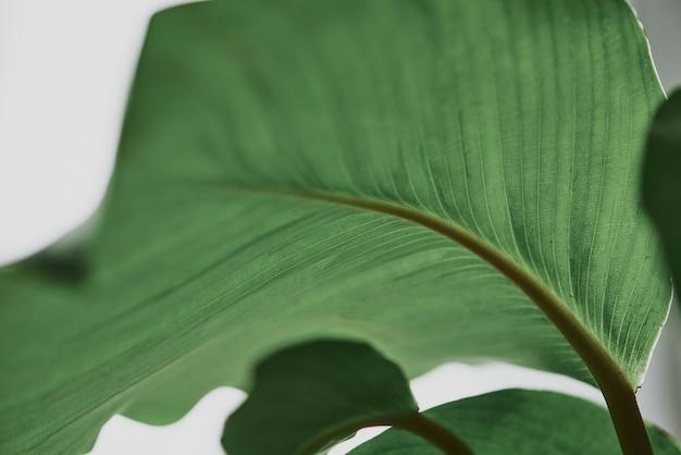 Zielone tło liścia z bliska