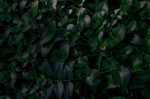 Zielone tło roślin naturalnych.