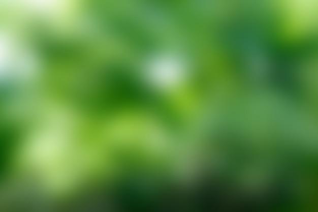 Zielone tło, rozmycie bokeh natury