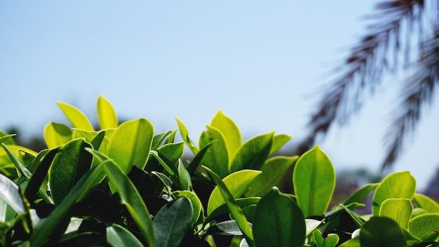 Zielone tło wzór liści, zielone naturalne tło i tapeta