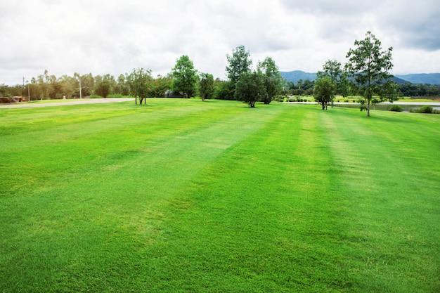 Zielone trawniki w parku.