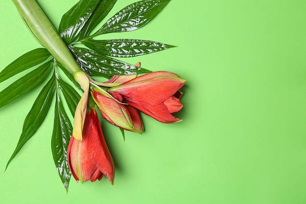 Zielone tropikalne liście i kwiaty
