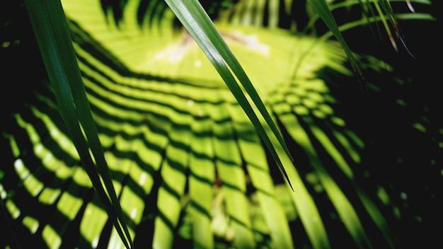 Zielone tropikalne liście palmowe, kwiatowy wzór tła, prawdziwe zdjęcie