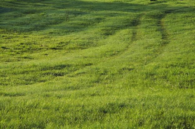 Zielone użytki zielone