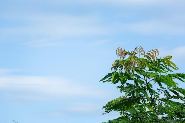 Zielone wierzchołki drzew na niebie, piękne światło.