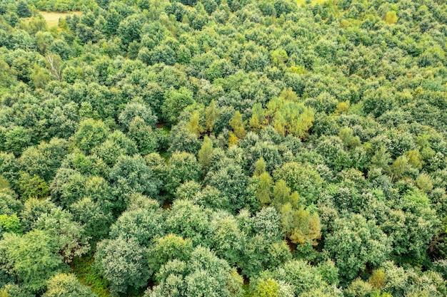 Zielone wierzchołki drzew z powietrza, letni krajobraz na tle