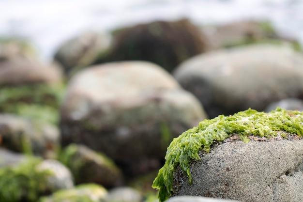 Zielone wodorosty na skałach