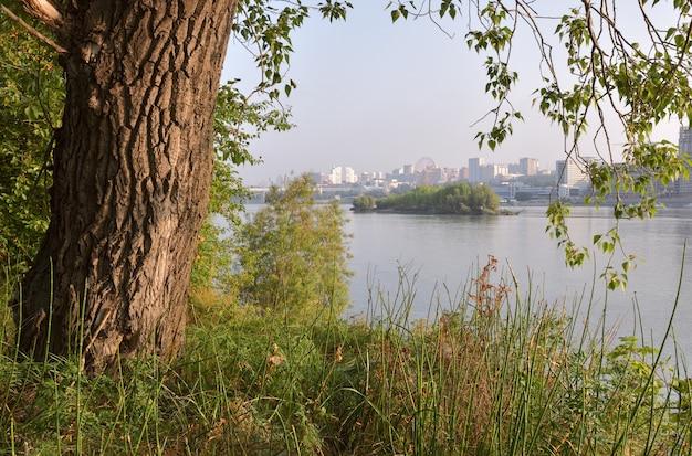 Zielone wybrzeże ob i nowosybirsk na horyzoncie zbliżenie pnia drzewa zielona trawa