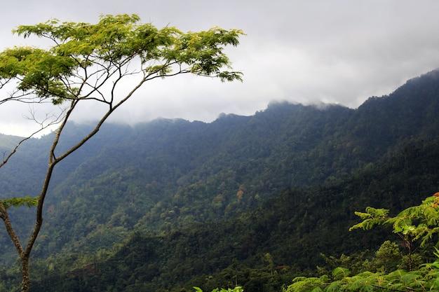 Zielone wzgórza z drzewem
