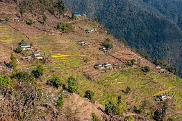 Zielone wzgórza z tarasami ryżowymi. nepal himalaje