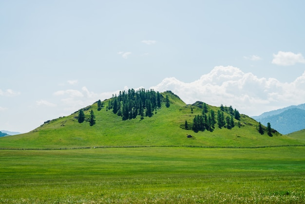 Zielone wzgórze z drzewami iglastymi.