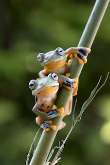 Zielone żaby na bambusowym drzewie