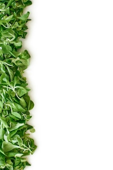 Zielone życie. zielona linia z liści szpinaku po lewej stronie obrazka. świeże liście sałaty i zieleń