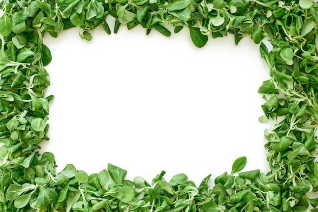 Zielone życie. zielony kwadrat z liści szpinaku. świeże liście sałaty i zieleń