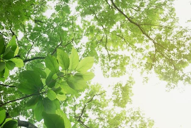Zielonego liścia miękka ostrość z zbliżeniem w natura widoku na zamazanym greenery tle