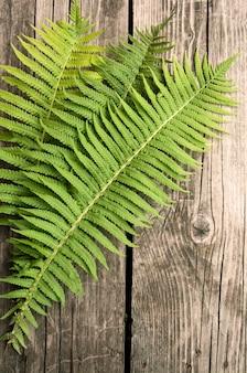 Zielonej paproci liście na drewnianej ciemnej powierzchni