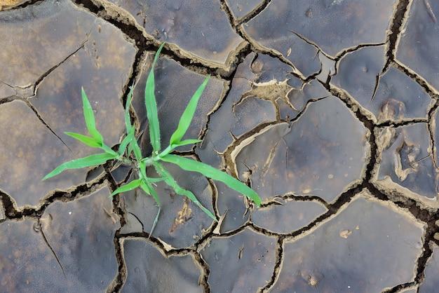 Zielonej rośliny dorośnięcia synkliny nieżywa ziemia.