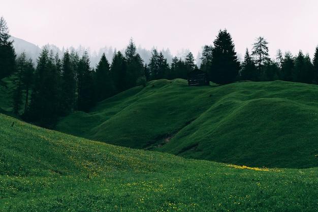 Zielonej trawy pole i drzewa