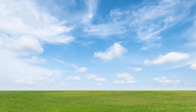 Zielonej trawy pole i niebieskie niebo z białymi chmurami.