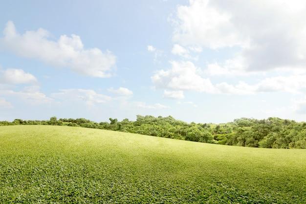 Zielonej trawy pole z drzewami