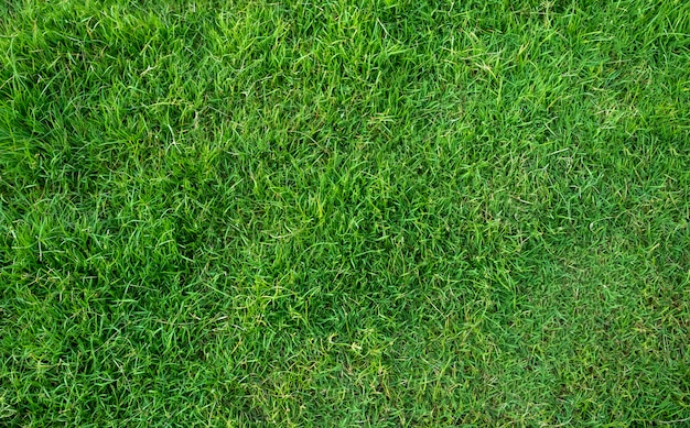 Zielonej trawy tekstura dla tła. zielony trawnik wzór i tekstura tło.