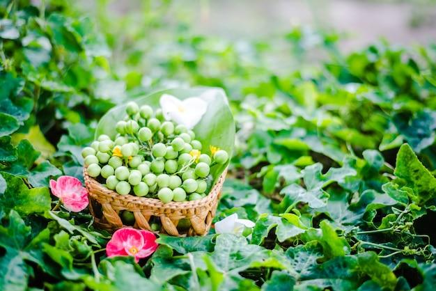 Zielony bakłażan, bakłażan, świeże warzywo
