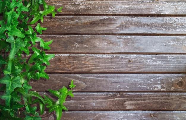 Zielony bluszcz na tle drewnianych desek. miejsce na tekst.