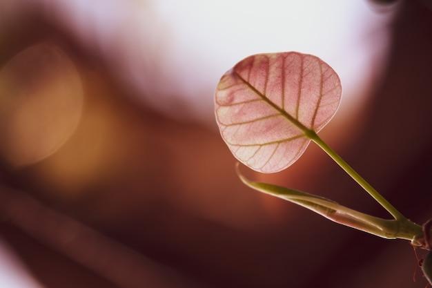 Zielony bo liść z światłem słonecznym w ranku tle