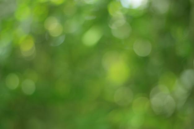 Zielony bokeh na charakter abstrakcyjny rozmycie tła zielony bokeh z drzewa