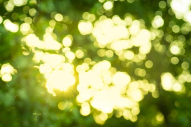 Zielony bokeh tło. zielony życiorys zamazany tło.