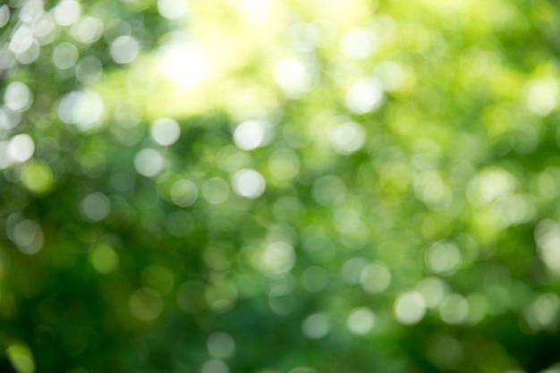 Zielony bokeh z promieniami słonecznymi