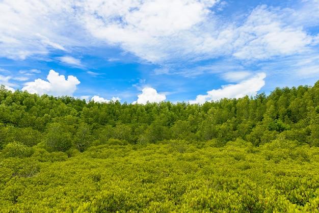 Zielony ceriops tagal pola tło w namorzynowym lesie