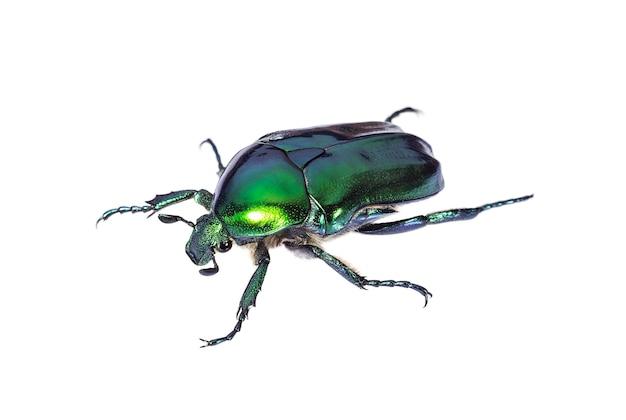 Zielony chrząszcz na białym tle z bliska
