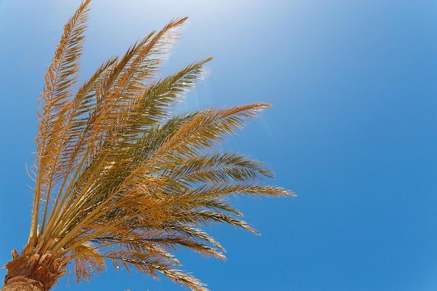 Zielony drzewko palmowe na niebieskim niebie