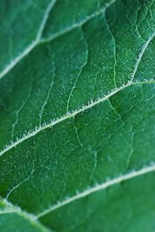 Zielony duży krzak łopianowy pozostawia teksturę. obraz roślin ozdobnych. szczegółowo ogród letni.