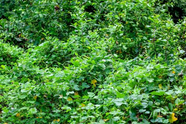 Zielony dźwięk liści w natue