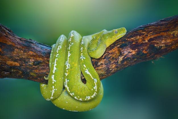 Zielony fiton na drzewie w tropikalnym ogrodzie