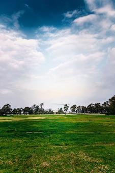Zielony gazon i niebieskie niebo przeciw miasta tłu.