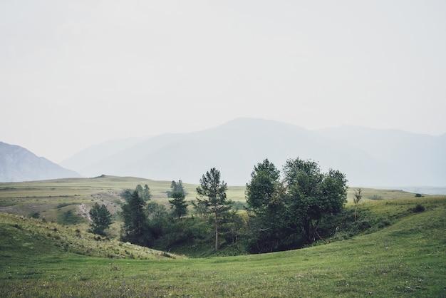 Zielony górski krajobraz z pięknym zagajnikiem wśród wzgórz we mgle. vintage mgliste górskie krajobrazy z drzewami wśród roślinności na tle górskich sylwetek we mgle. atmosferyczny mglisty krajobraz