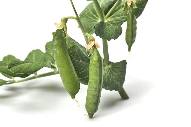 Zielony groszek z liśćmi na białym tle