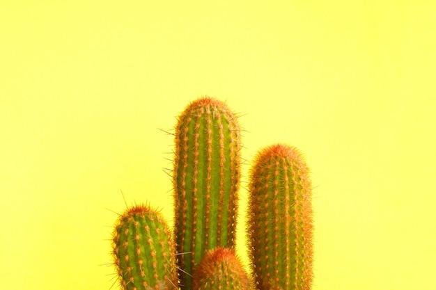 Zielony kaktus na żółtym tle.