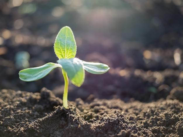 Zielony kiełek wyrastający z gleby