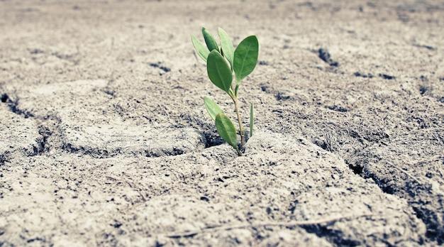 Zielony kiełek z obrazem suchej popękanej ziemi z retro vintage ciepłym instagramem jak filtr