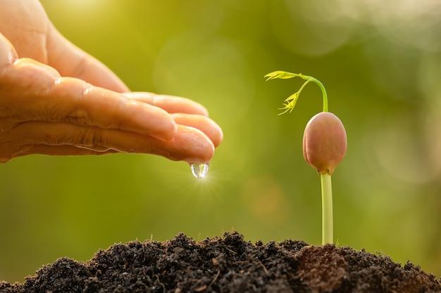 Zielony kiełkowy dorośnięcie w ziemi z plenerowym światłem słonecznym i zieloną plamą. koncepcja uprawy i środowiska