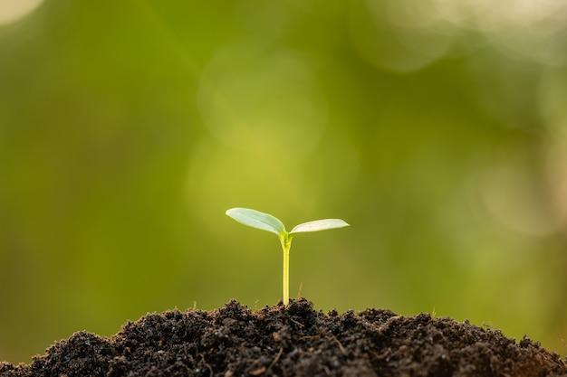 Zielony kiełkowy dorośnięcie w ziemi z plenerowym światłem słonecznym i zielonym plamy tłem. koncepcja uprawy i środowiska
