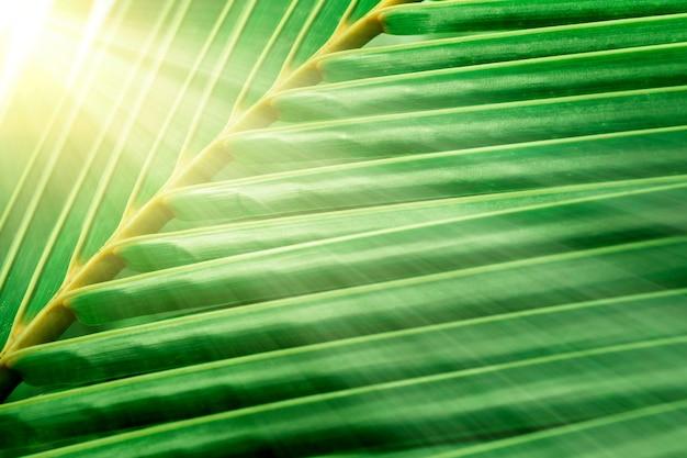 Zielony kokos pozostawia w tle wschód słońca latem