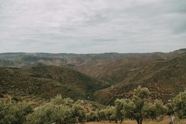Zielony krajobraz z dużą ilością zielonych drzew i gór pod burzowymi chmurami