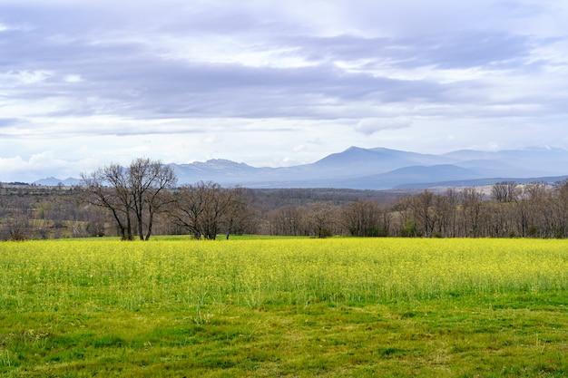 Zielony krajobraz z żółtymi kwiatami i górami z zachmurzonym niebem. madryt. hiszpania.